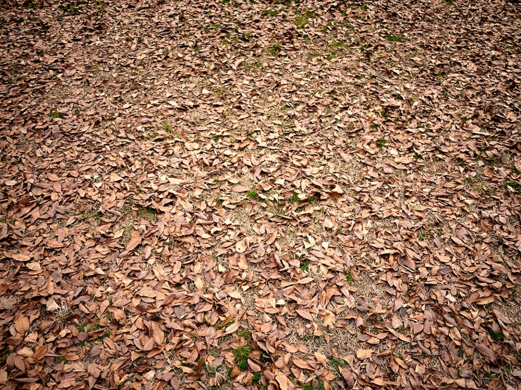 一気に秋に突入です!