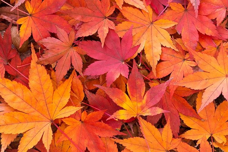 秋は一気に過ぎて行きましたね。