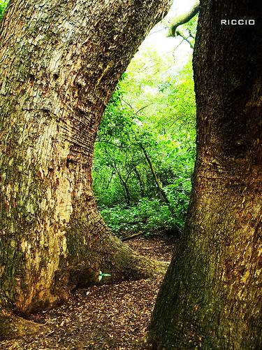 やっぱり「生命線」です! photo credit: Dos via photopin (license)