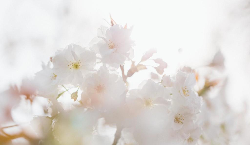 ようやく春を迎えられそうです!